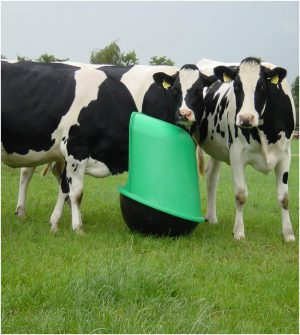 Mineral feeder for cattle